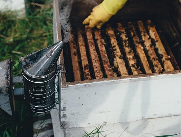 Beekeeper List Of Outdoor Jobs