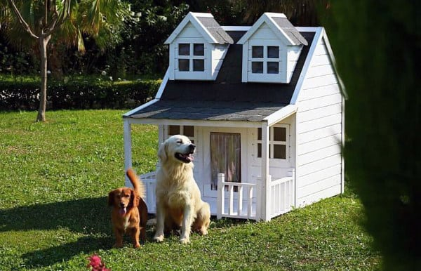 Best Dog House Design White Exterior Paint With Windows