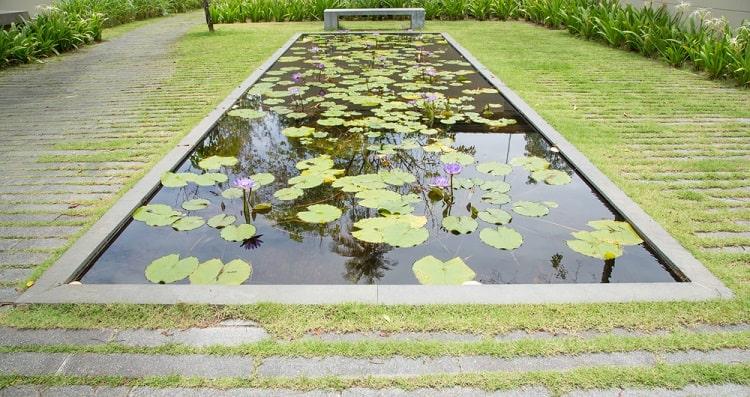 Big Backyard Garden Pond Ideas With Lotus