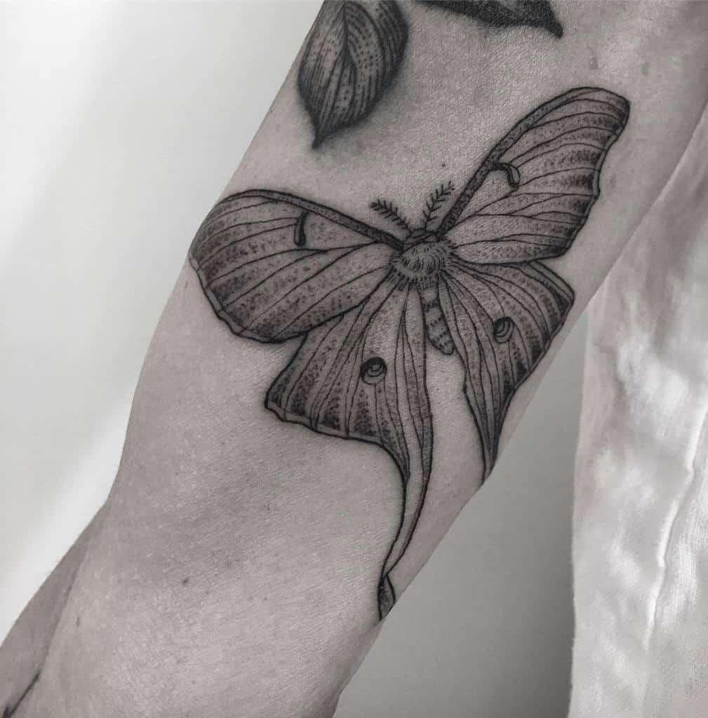 Black And Gray Luna Moth Tattoo Koreanhammer