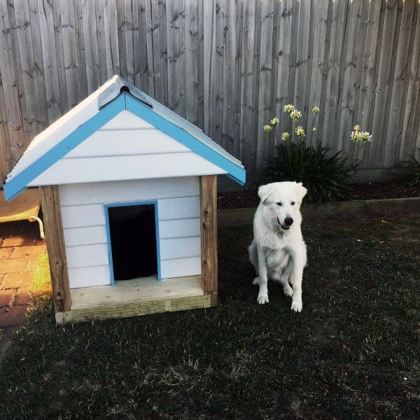 Blue And White Dog House Designs