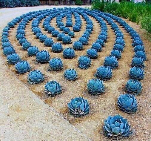 Blue Pattern Desert Landscape Plants Ideas