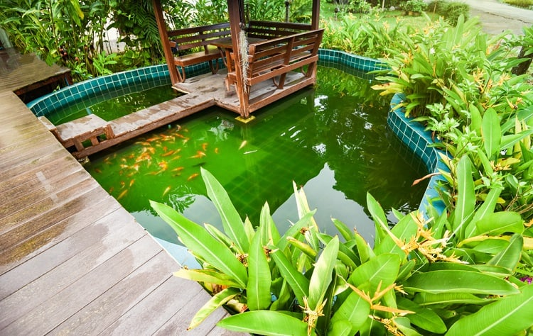 Blue Tiles Backyard Container Pond