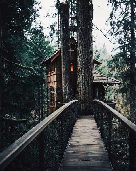 Bridge Treehouse Ideas