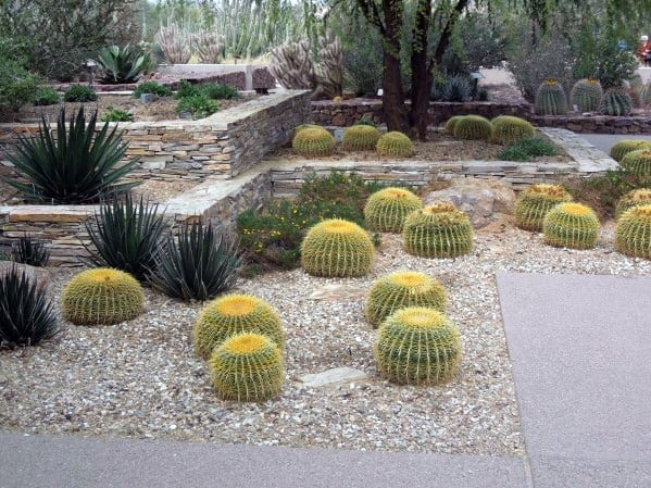 Cactus Desert Landscaping Home Ideas
