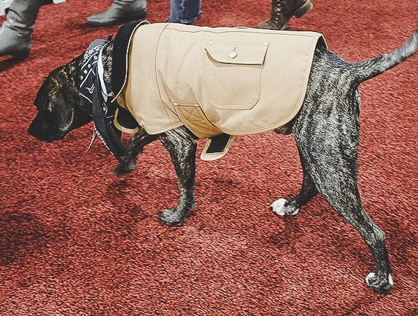 Carhartt Dog Vest At Or Denver Colorado Convention Center