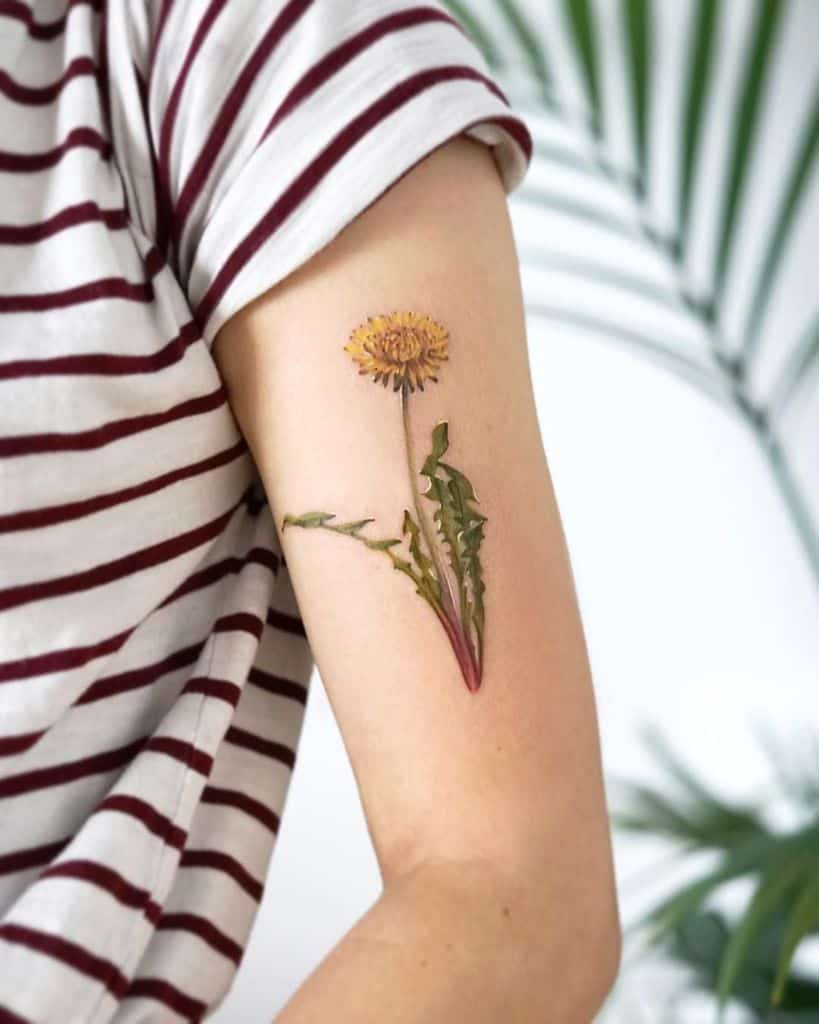 Colored Dandelion Flower