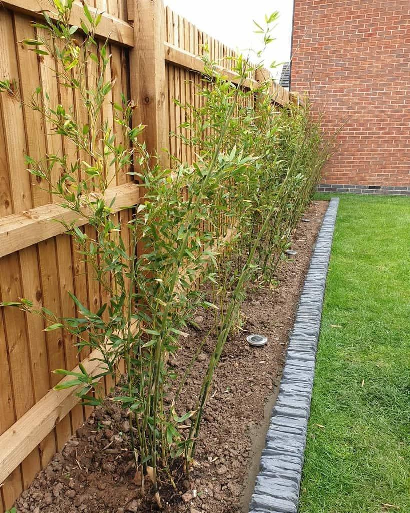 concrete render garden edging ideas whoneedsapro