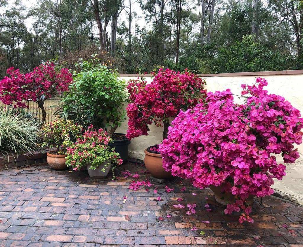 container garden flower garden ideas ouraustraliangardens