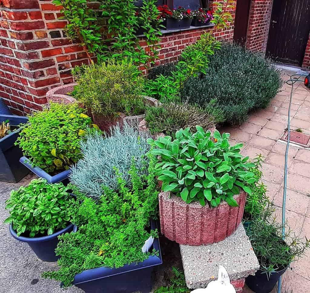 container herb garden herb garden ideas hetharenstuintje