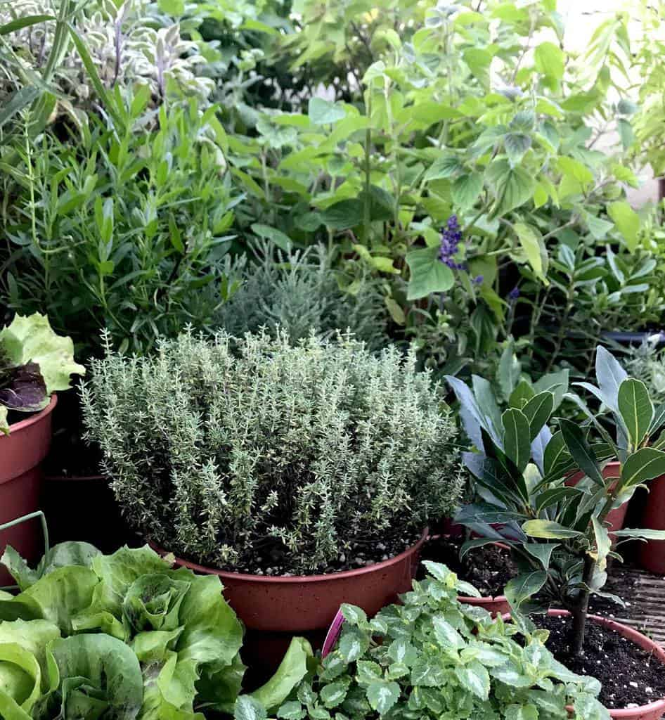 container herb garden herb garden ideas mintandchives