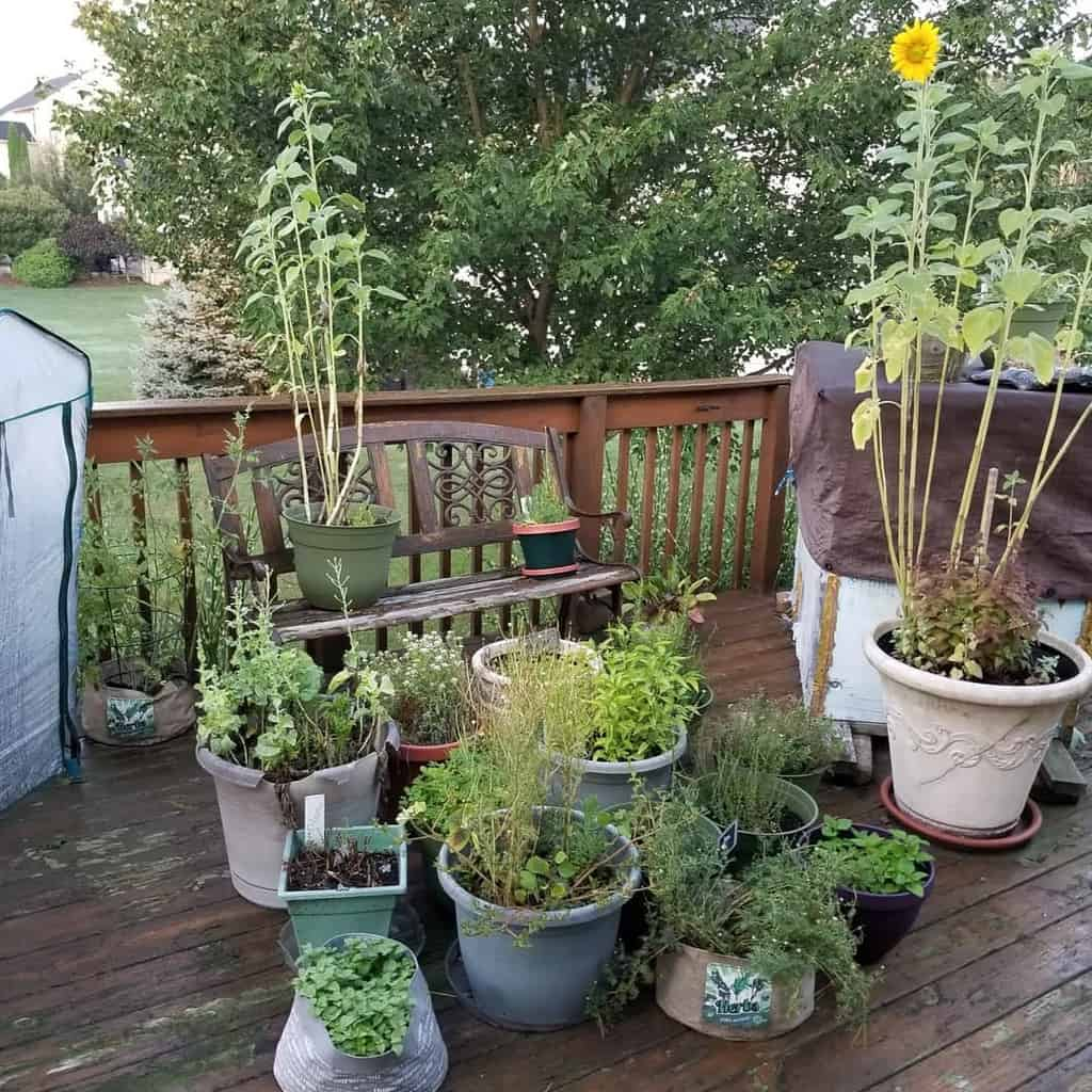 container herb garden herb garden ideas pandastamper