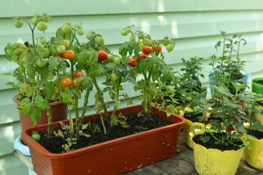 container vegetable garden ideas 1