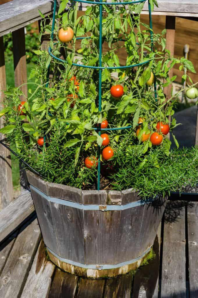 container vegetable garden ideas 2