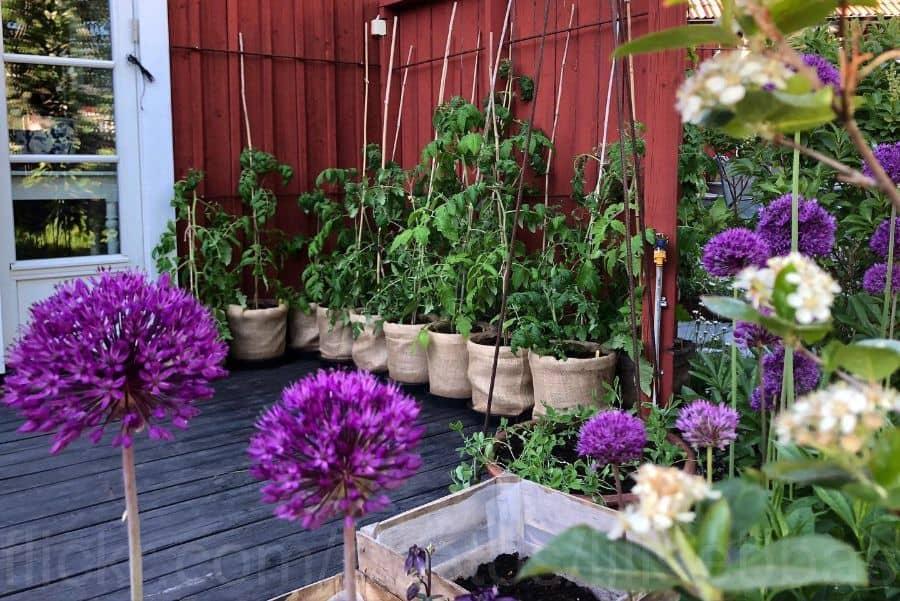container vegetable garden ideas lillsebbas