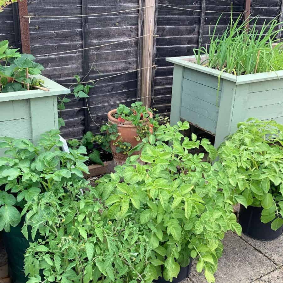 container vegetable garden ideas mrs.h.spice