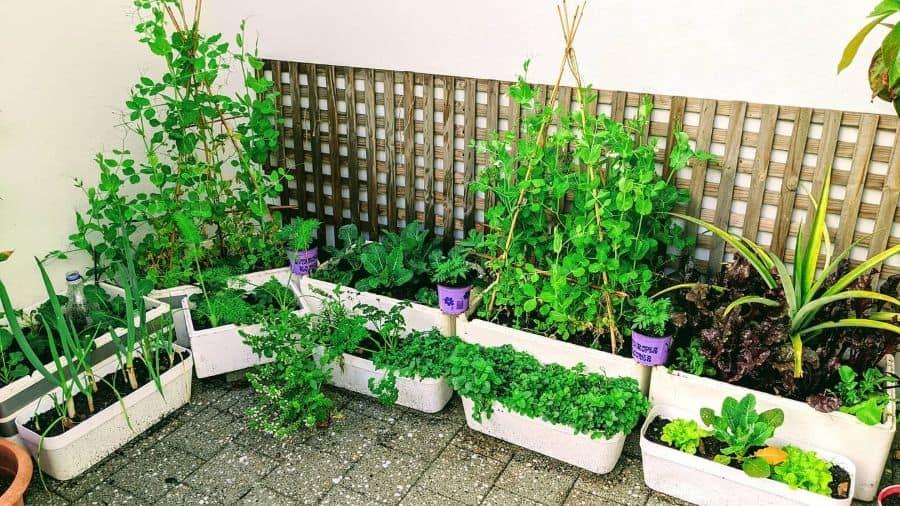 container vegetable garden ideas victorygardensofperth