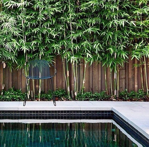 Cool Bamboo Wood Fence Pool Landscaping