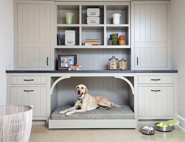 Cool House Dog Room
