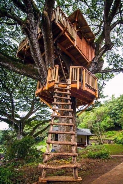 Cool Tree House Ideas