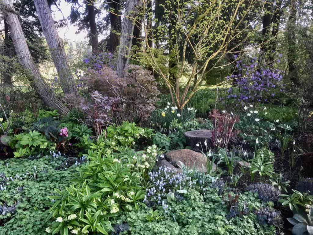 cottage garden shade garden ideas hobbs_thomasvancouver