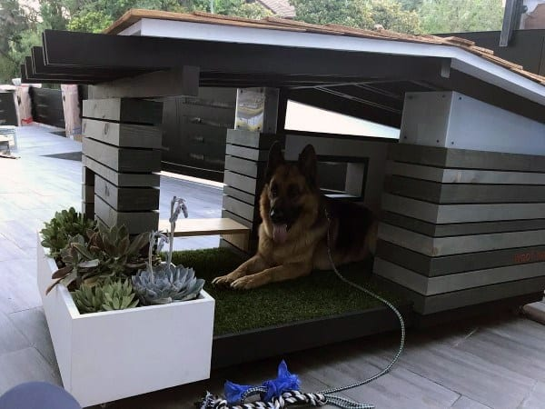 Creative Dog House Designs
