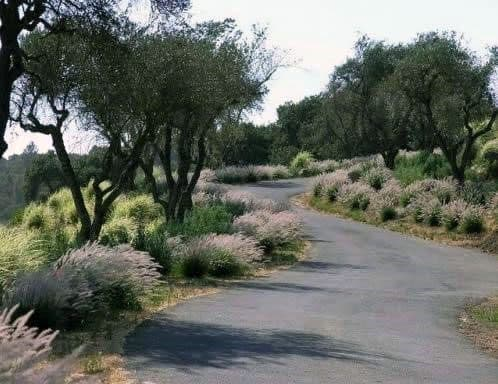 Curved Driveway Landscape Plants And Tree Ideas
