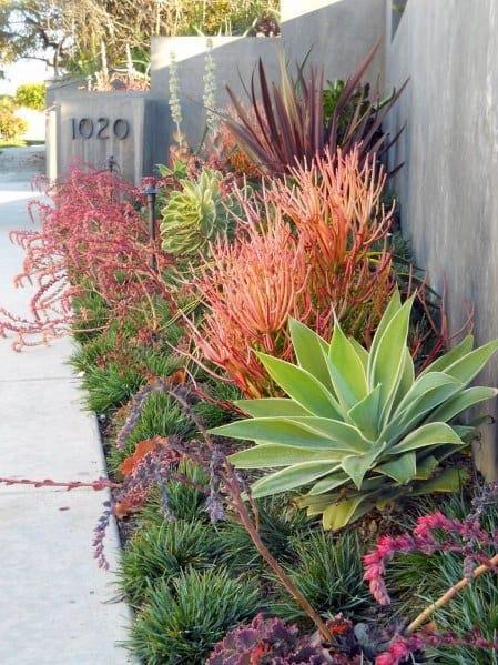Desert Landscaping Plant Ideas