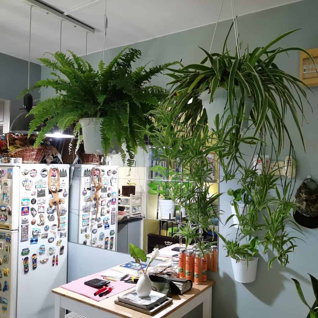 dining room and kitchen indoor garden ideas baba_dendrophile