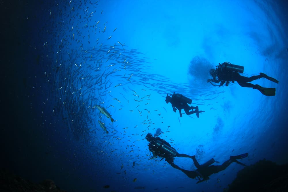 divers in sea blue water near to fishes