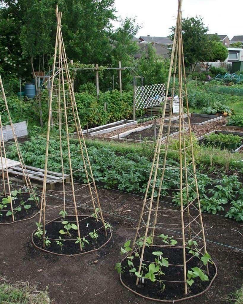 diy garden trellis ideas freshearthgardens
