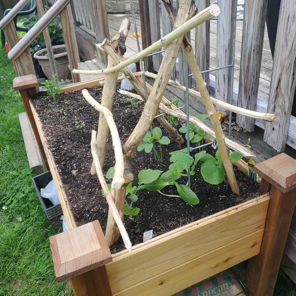 diy garden trellis ideas wedge_antilles