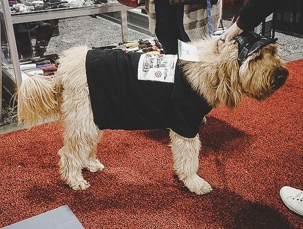 Dog At 2019 Outdoor Retailer Snow Show In Colorado