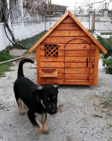 Dog House Design Ideas