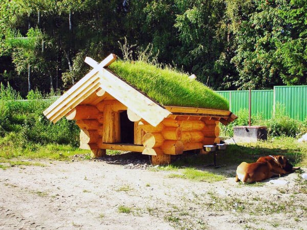 Dog House Designs With Grass Roof