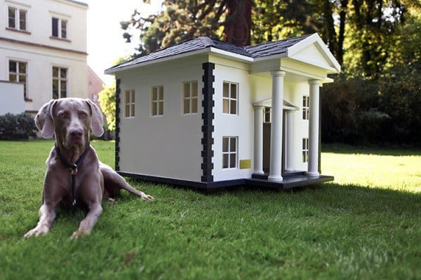 Dog House Mansion Designs