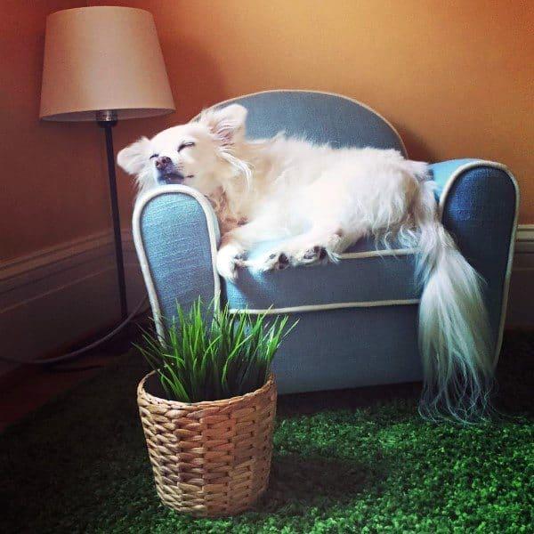 Dog Room Interior Design
