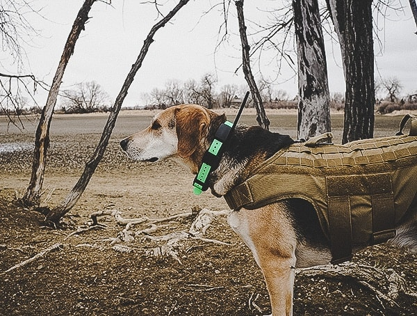Dog Training Sportdog Brand Tek 1 5 Gps Tracking Plus E Collar Reviews