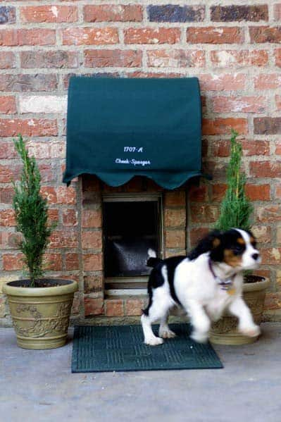 Doggy Door Ideas With Planters And Awning Cover