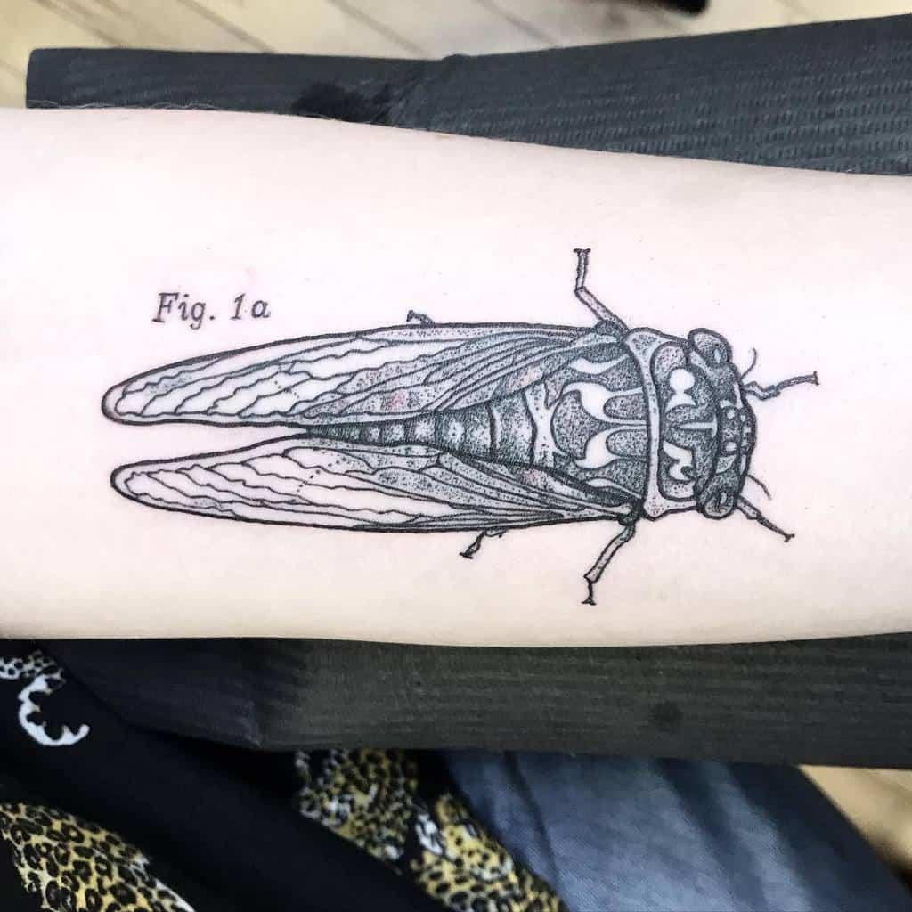 dotwork Cicada Tattoos selahjude