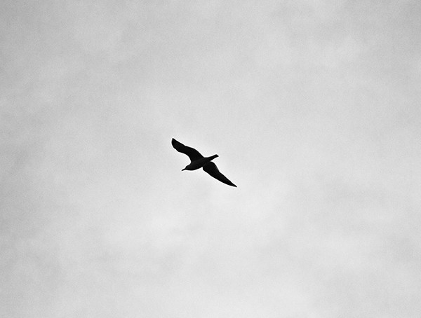 Eagles Fly Alone Important Life Lessons For Men