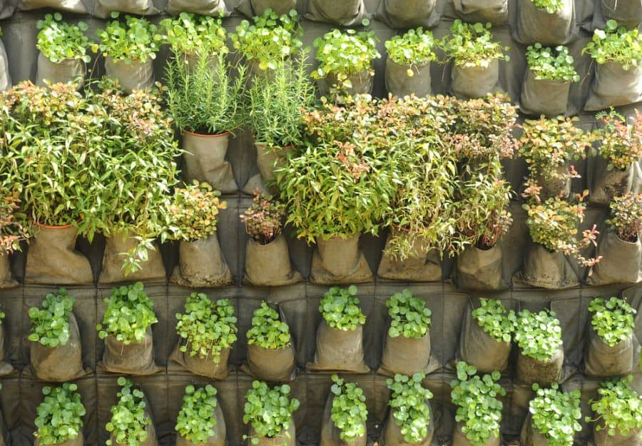 easy vertical garden ideas 1