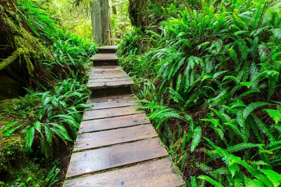 Top 50 Best Wooden Walkway Ideas Wood Path Designs