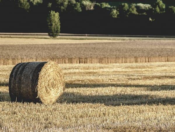 Farmer Outdoor Job Industry