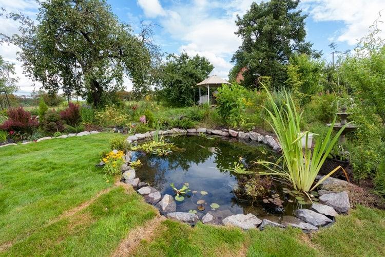 Fish Pond With Waterlily Backyard Fountain