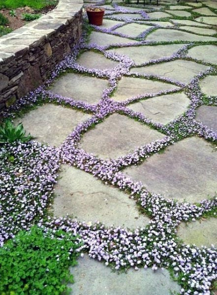 Flower Filler Flagstone Patio Idea Inspiration