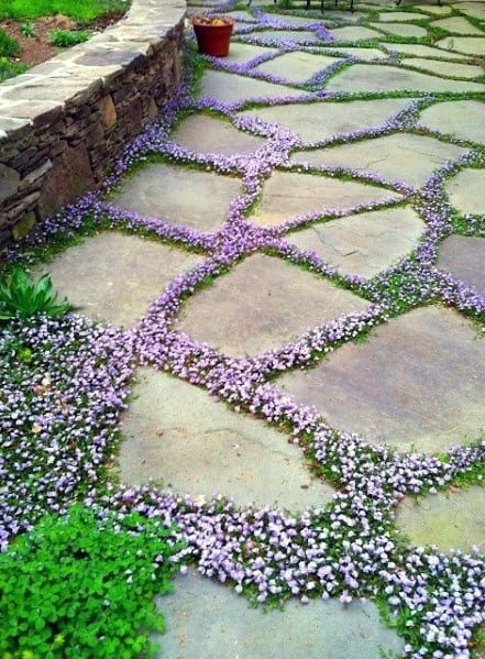 Flower Ideas For Home Stone Walkway