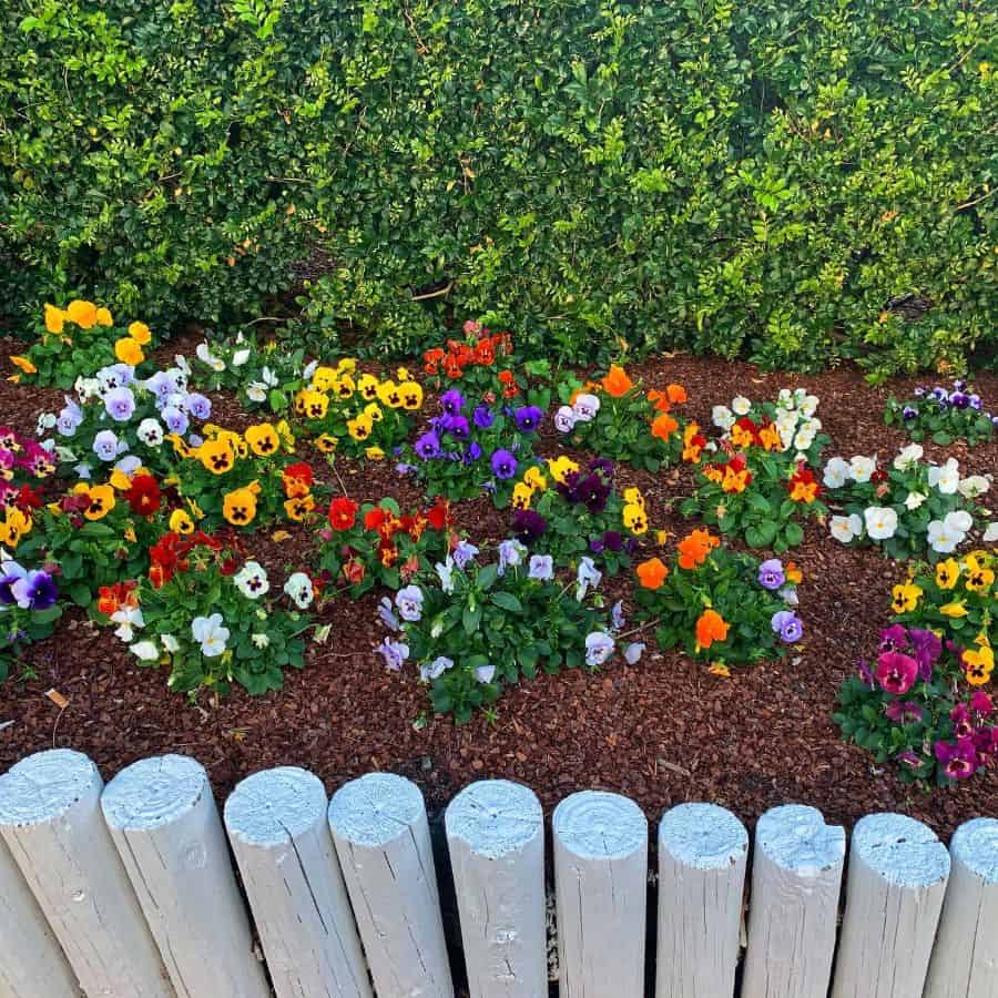 flowerbed along the fence flower bed ideas snapsbytasha