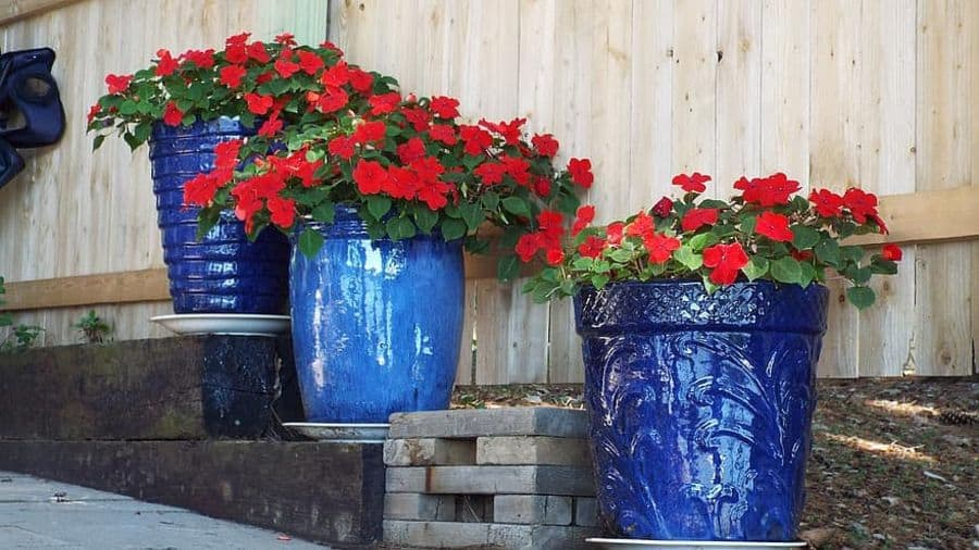 flowering and ornamental plants container garden ideas 1