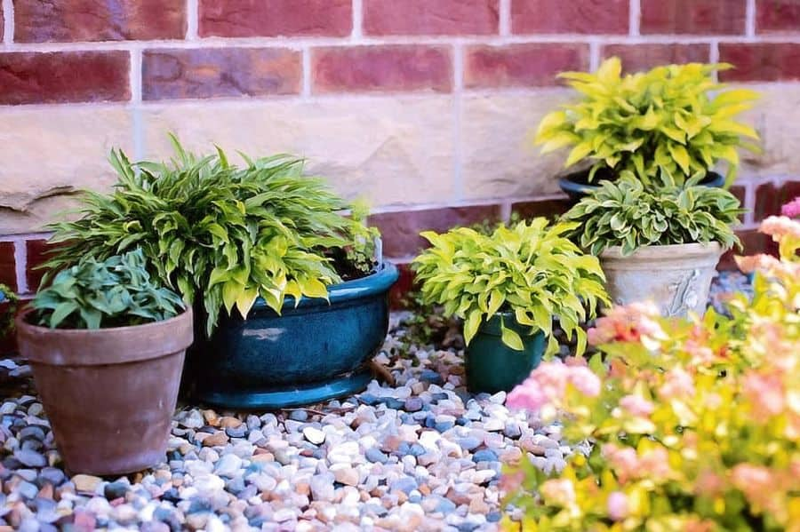 flowering and ornamental plants container garden ideas 2